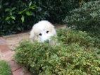Bella bei der Gartenarbeit