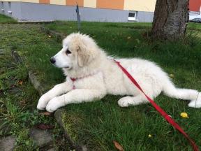 Bella beim Spazierenliegen (2) 😂