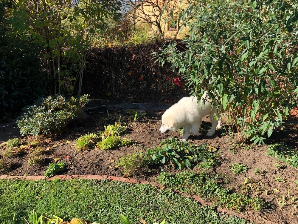Garten kontrollieren
