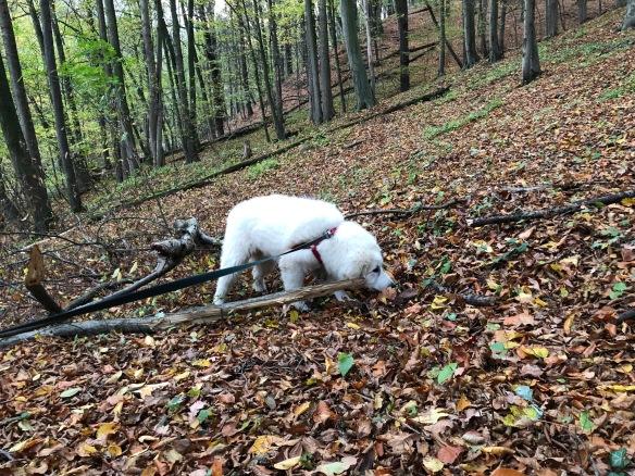 Bella im Schnuffellaubwald