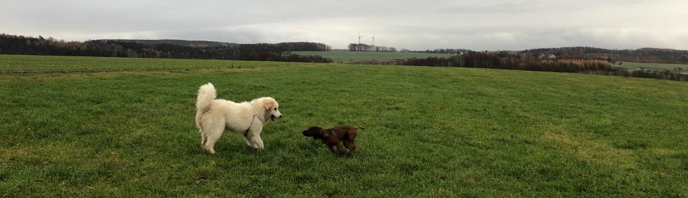 Mit meiner Freundin Cora auf meiner großen Feldwiese