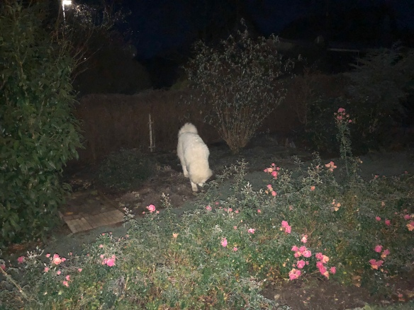 Garteninspektion am Morgen