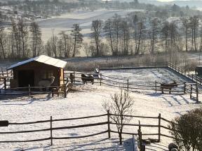 Alpakas und Esel vor dem Landhaus