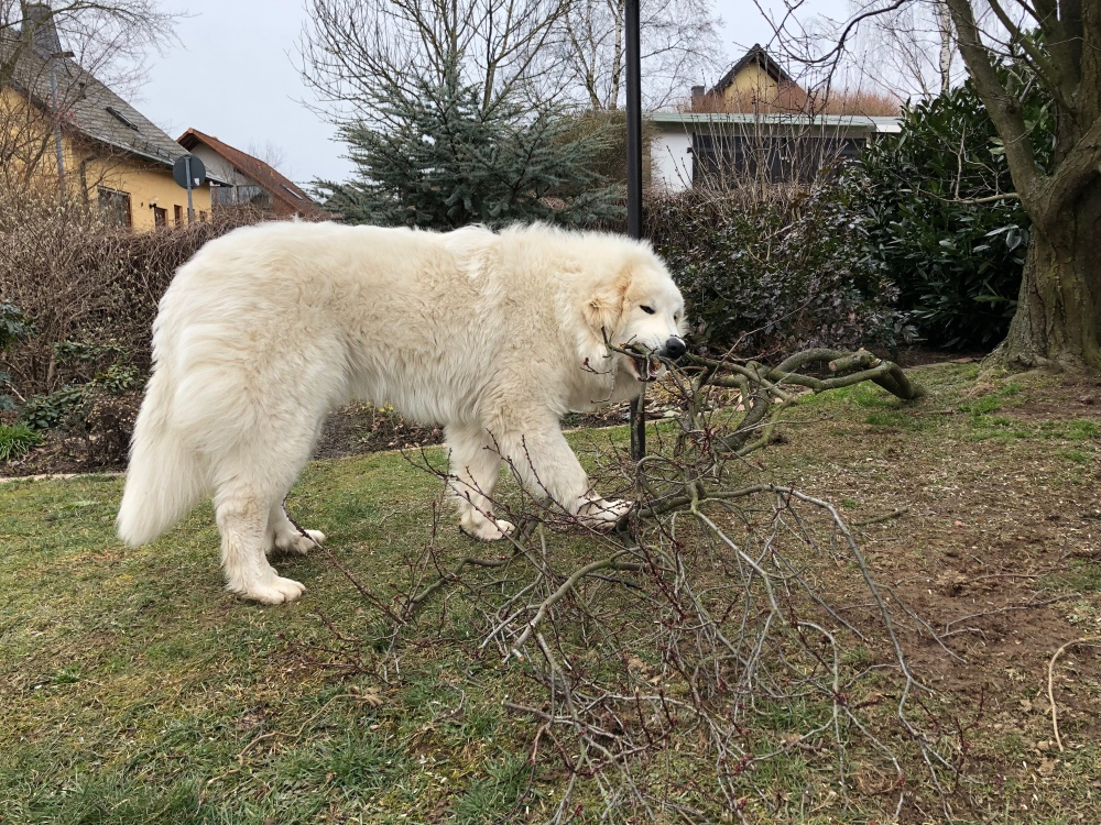 Ich hab jetzt meinen eigenen Baum