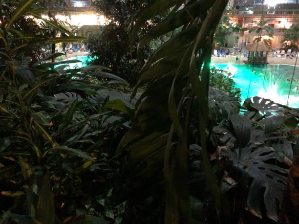 Blick vom Regenwald über die Lagune