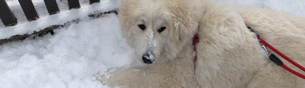 Die Bella ist eine kleine Eisbärin