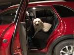 Die Bella in ihrem Auto