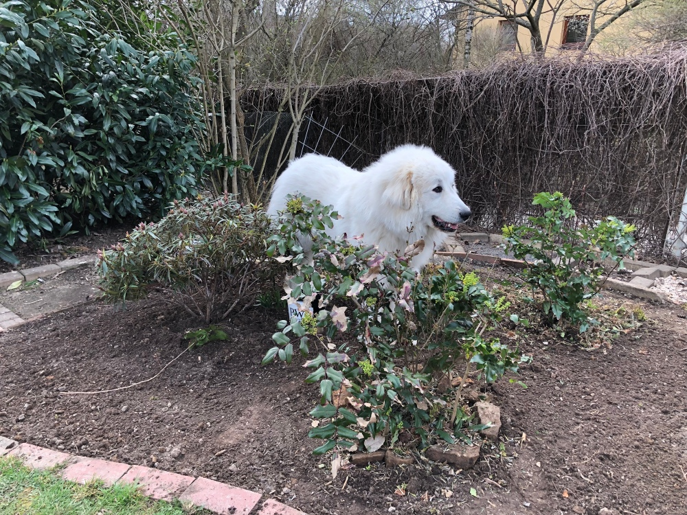 Neu gestalteten Garten kontrollieren