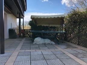 Pyriprinzessinnenschönheitsschlaf auf meiner Terrasse