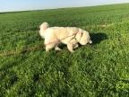 Mit roter Feldleine auf meiner grünen Feldwiese