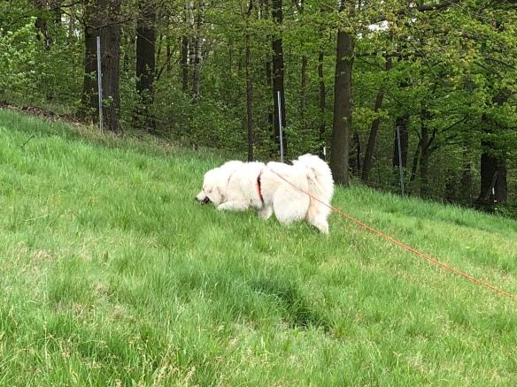 Bella auf der großen Feldwiese