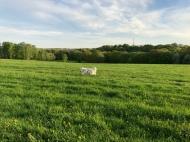 An der Feldleine über die große Feldwiese flitzen