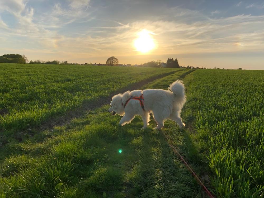 Feldleinenspaziergang macht Spaß