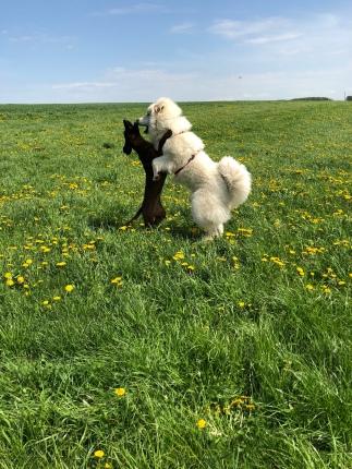 Wir tanzen auf der großen Feldwiese