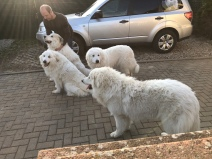 Fin, Ivy, Sissi und Bella