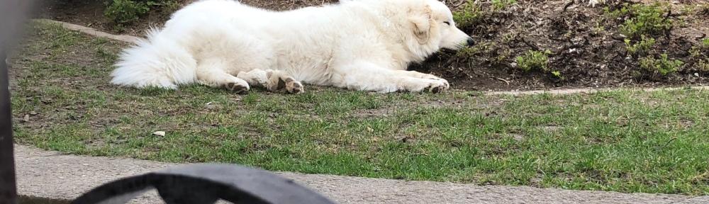 Die Bella liegt im Dreck … und will da auch nicht weg 🐶😂🐶