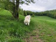 Schnuffeln an der Feldleine