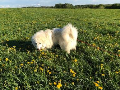 Gelbe Blümchen auf meiner Feldwiese