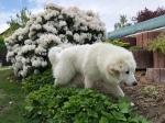 Bella strolcht durch ihren Garten