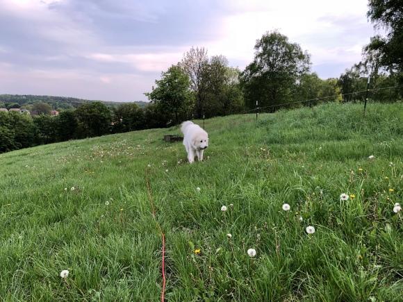 Abendspaziergang auf der Feldwiese