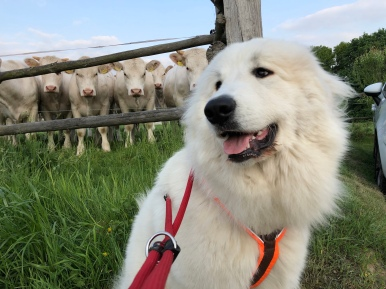 Bella bei den Rindviehchern