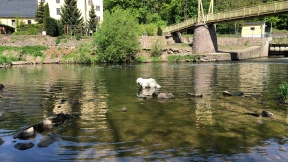 Bella ganz tief im Wasser