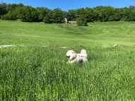 Bella flitzt durchhohes Gras
