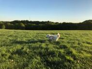 Durch's hohe Gras