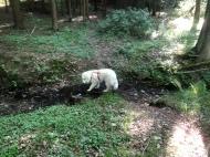 Im kleinen Bächlein im Wald