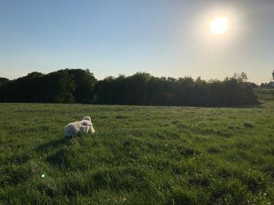 Bella flitzt durch hohes Gras