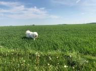 Bella auf dem großen Feld