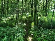 Wie im Dschungel