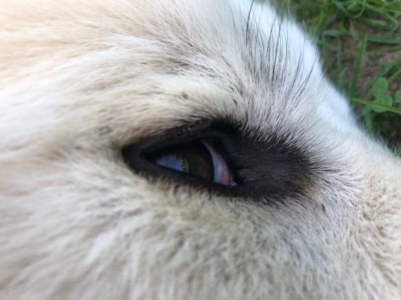Ich seh' Euch!