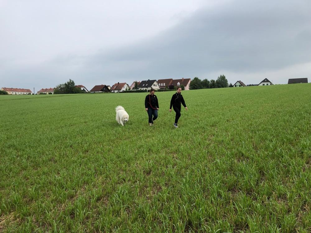 Mit meinen Menschenschwestern auf dem Feld
