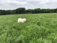 Bella im hohen Gras auf ihrer Feldwiese