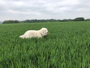 Bella kürzt zu hohes Gras