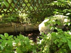 Bella im kleinen Bächlein