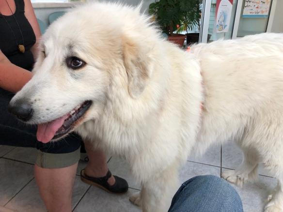 Die Bella beim Tierarzt im Wartezimmer