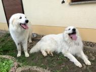 Bella und ihr riesiger Fin
