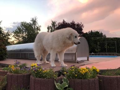 Abends in meinem Garten
