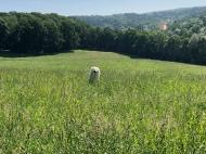Bella im hohen Gras