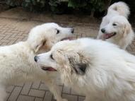 Fin, Bella & Sissi