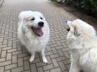 Mein riesiger Fin und die Bella