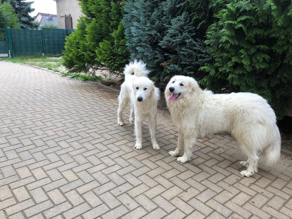 Die Bella und ihre kleine Sissi-Schwester