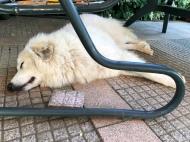 Die Bella macht einen Pyriprinzessinnenschönheitsschlaf