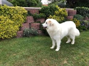 Das ist mein Garten!