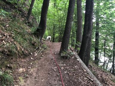 Durch den Wald …