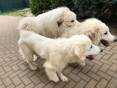 Die Sissi, die Bella und der riesige Fin