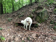 … und im Wald