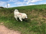 Spaziergang an der großen Feldwiese